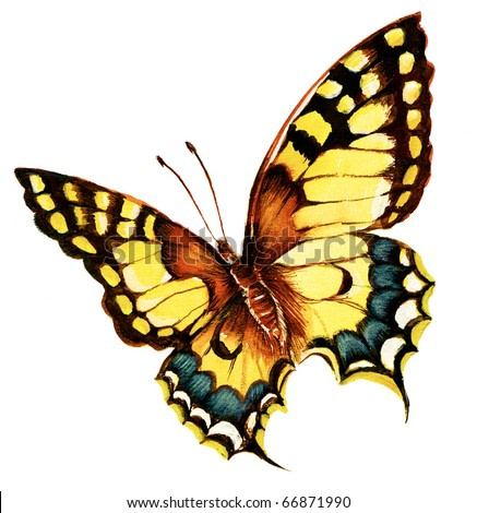 Painting of bright machaon butterfly over white background