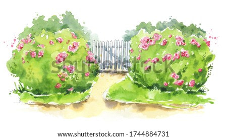 Watercolor illustration of a wooden garden gate with rose bushes