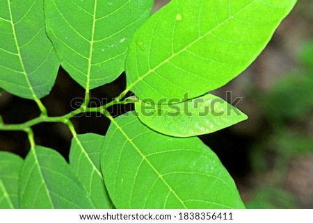 The green leaf in nature