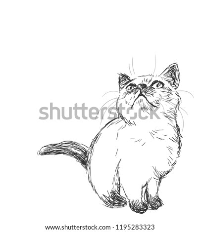 Siamese cat vector sketch illustration card isolated
