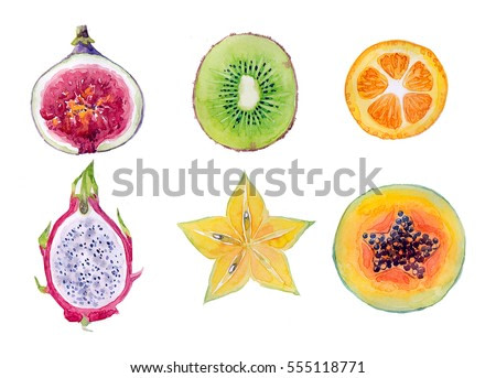 Watercolor hand-drawn exotic fruits on white background (isolated)