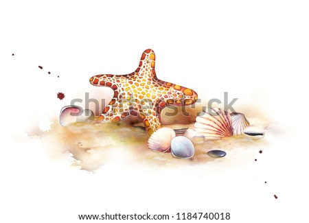 Watercolor set of underwater life objects. Seashells on the beach. Hand-drawn composition of orange starfish, stones and seashells. Perfect for scrapbooking design, invitations, cards
