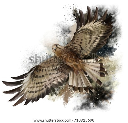 Falcon in flight watercolor painting