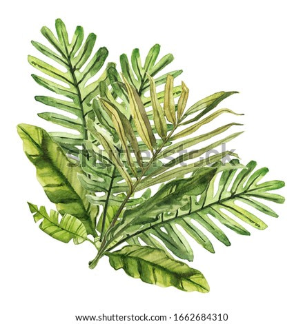 Watercolor hand drawn rainforest tropical leaves botanical illustration isolated on white background