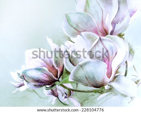 Fabulous magnolia flowers in soft blue tones. Hand illustration - watercolor drawing with colored pencils on  textured paper.