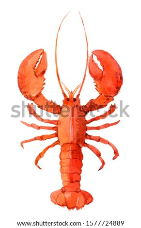Watercolor lobster isolated on white background