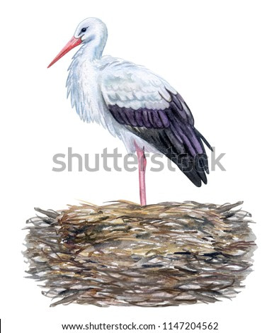 Stork in a nest isolated on white background. Watercolor. Template. Close-up. Clip art. Hand draw