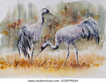 Pair of a crane birds on a meadow. Picture created with watercolors.