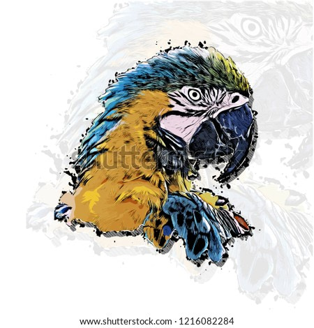 Parrot head vector colorful realistic hand-drawn sketch style isolated illustration with big transparent parrot background