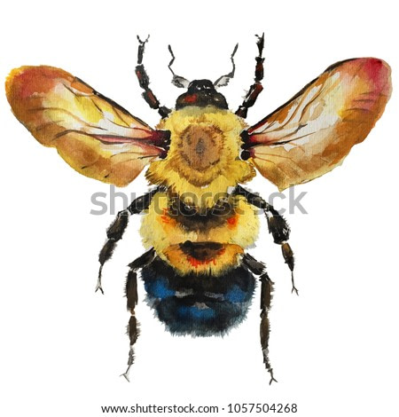 Isolated watercolour painting of bee on white background