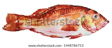 Isolated watercolour painting of fish on white background
