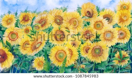 Watercolor draw of bright summer sunflower field, field of gold, yellow flowers of Tuscany