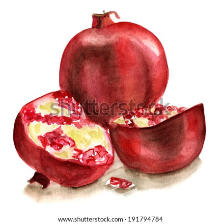 A watercolour drawing of a pomegranate on white background