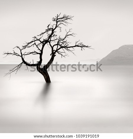 Fine Art images of trees in the water