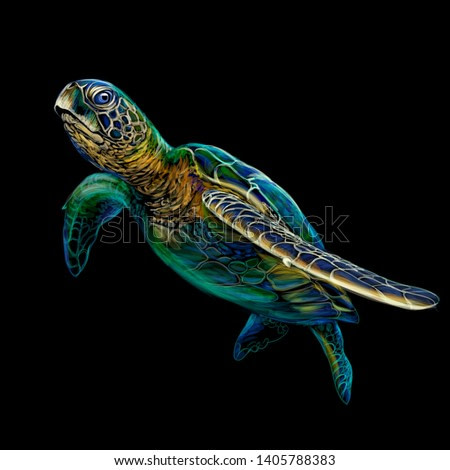 Sea turtle. Realistic, artistic, colored drawing of a sea turtle on a black background.
