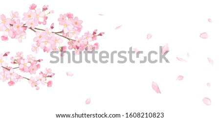 Spring flowers: cherry blossoms and falling petals background-watercolor illustration