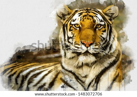 Digital watercolor painting of Tiger. Digital art. Digital watercolour painting of Beautiful image of a Tiger King relaxing on a warm day. Isolated painting of Cute Tiger. Abstract Animal Wallpaper