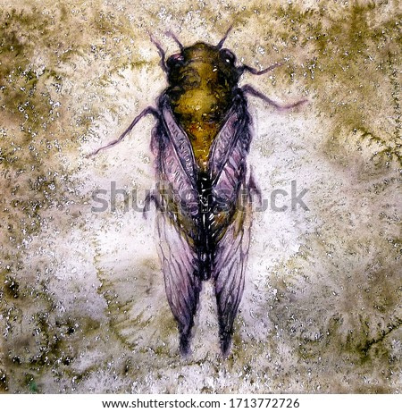 watercolor painting of a winged insect