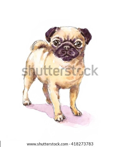 Watercolor Dog Pug Portrait - Hand Painted Animals Pets Illustration isolated on white background
