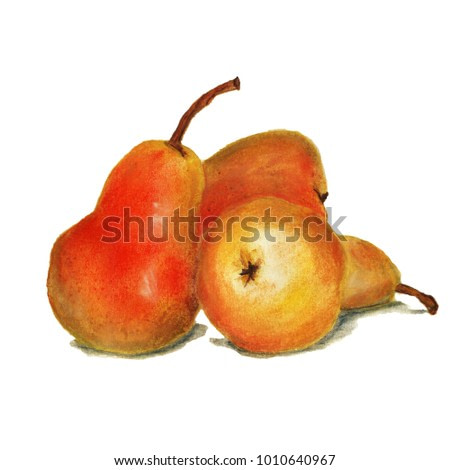 Pear watercolor food illustration.Hand painted watercolor illustration.