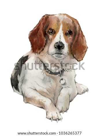 Hand drawn painting of Beagle dog. Portrait of a cute dog. Beagle dog watercolor illustration.