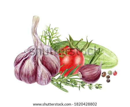 Garlic rosemary tomato cucumber dill peppercorns composition watercolor painting isolated on white background