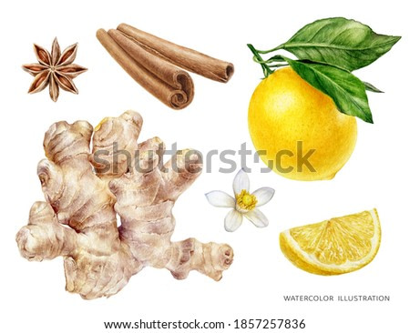Ginger watercolor illustration isolated on white background