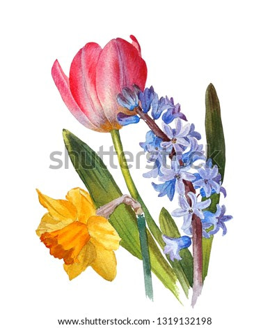 Spring flowers. Tulip, hyacinth, narcissus on a white background. Botanical illustration. Watercolor painting.