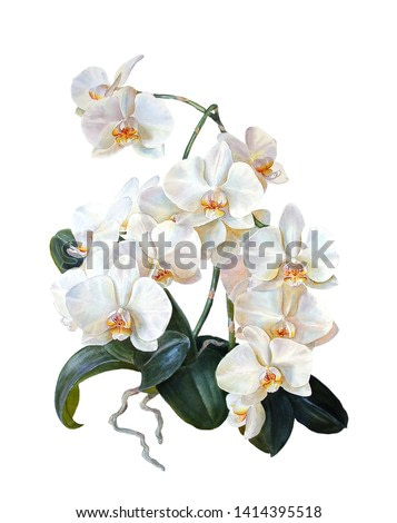 Floral background.White orchid, isolated on a white background. Branch. Buds. Tropical flowers. Botanical illustration. Watercolor painting.