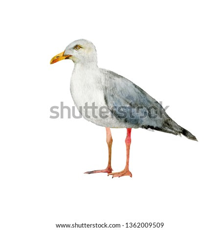 Seagull realistic watercolor illustration isolated on white. Watercolor painting perfectly captures summer sea theme.