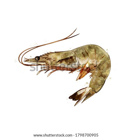 Shrimp, watercolor isolated illustration of a crustacean.