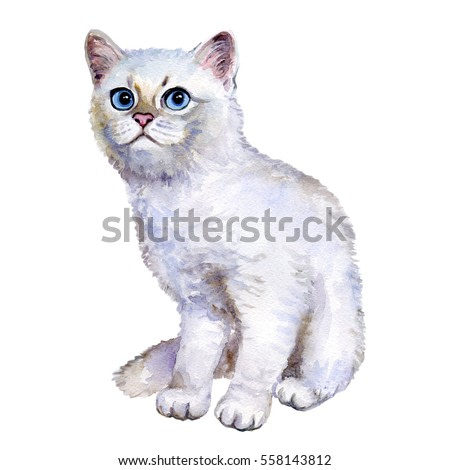 Watercolor close up portrait of popular British shorthair silver kitten isolated on white background. Sweet rare silver chinchilla colouration highland. Hand drawn pet. Greeting card design. Clip art
