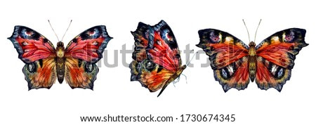 Watercolor Drawing of Peacock Butterfly. Botanical Illustration of Aglais Io in Vintage Style. Summer Insect with Colorful Wings Isolated on White.