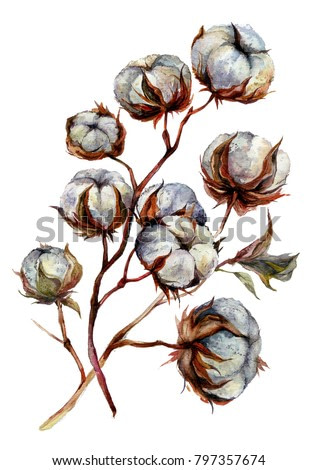 Watercolor Cotton Plant Isolated on White. Drawing of Cotton Bolls. Rustic Floral Wedding Arrangement. Farmhouse Decor. Country Lifestyle. Vintage Style Botanical Illustration.