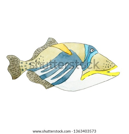 Picasso triggerfish fish on white background. Hand drawn watercolor illustration.