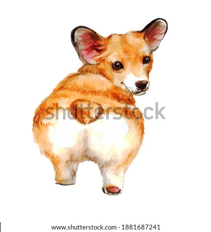 cute realistic red corgi on a neutral background. watercolor illustration or picture with a dog
