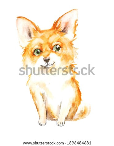 cute chihuahua sits on a neutral background. watercolor illustration or print of a pet dog