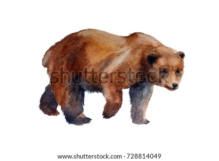 realistic brown bear on a white background. watercolor illustration
