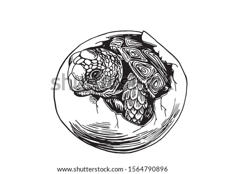 Graphical sketch of tortoise in egg isolated on white background,vector illustration , baby