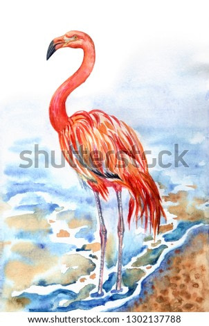 Flamingo on the seashore, watercolor painting. Red flamingo (Phoenicopterus ruber), zoological illustration, hand drawing.
