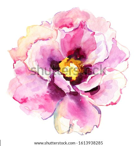 Big pink peony flower.  Watercolor painting. beautiful flowers, peonies on isolated white background, watercolor illustration, botanical painting