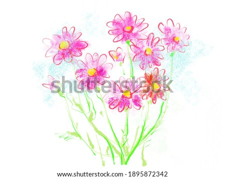 cosmos flowers. Floral natural design. Graphic, sketch drawing. Isolated cosmea illustration element.