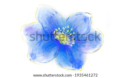 Japanese Anemone flower. Hepatica isolated in white