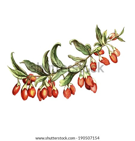 Watercolor goji berries. Hand-painted. Watercolor illustration. Card with floral motifs.
