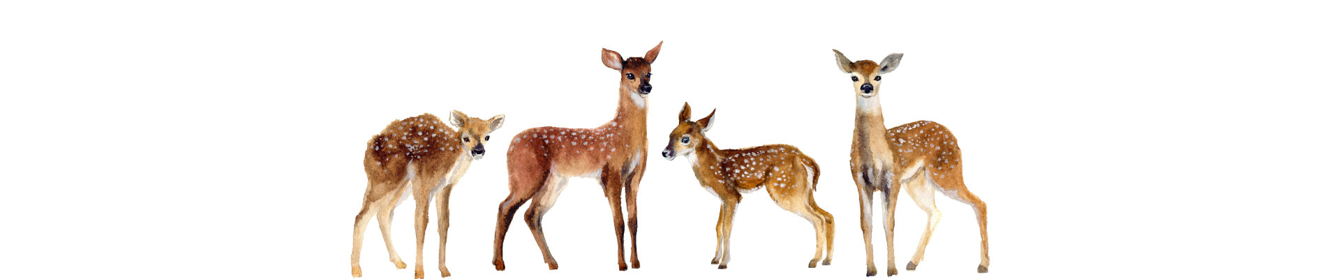 Animal themed wall art canvas and paper prints