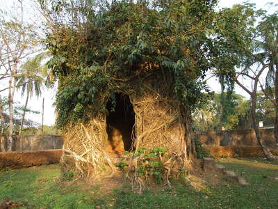 Ancient temple under the tree roots.